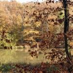 arlette - étang picard (8)