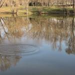 étangs (10)