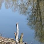 étangs (12)