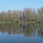 étangs (13)