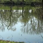 étangs (3)